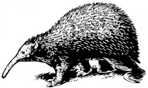 zaglossus-icon